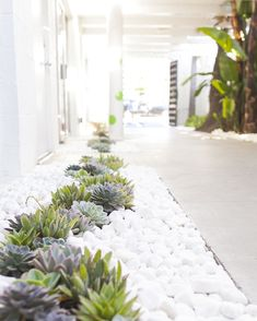 Awesome 80 Beautiful Front Yard Landscaping Ideas https://insidecorate.com/80-beautiful-front-yard-landscaping-ideas/ #landscapefrontyardwalkway