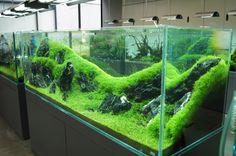 「ついに聖地へ!ADA(アクアデザインアマノ)ネイチャーアクアリウムギャラリーへ!!」AIR_0310のブログ記事です。自動車情報は日本最大級の自動車SNS「みんカラ」へ! Aquarium Aquascape, Aquascaping, Planted Aquarium, Aquarium Landscape, Home Aquarium, Nature Aquarium, Aquarium Design, Plant In Glass, Goldfish Tank