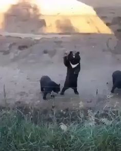 Animals Discover Bears saying hello. - Pets Our Best Friends - Cute Funny Animals Cute Baby Animals Animals And Pets Cute Cats Cute Animal Videos Funny Animal Pictures Funny Animal Memes Dog Memes Animal Pics Cute Funny Animals, Cute Baby Animals, Funny Cute, Animals And Pets, Cute Cats, Nature Animals, Cute Animal Videos, Funny Animal Pictures, Animal Pics