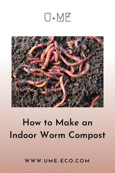 Indoor worm compost is a great first nature project for kids. Heres how to make an indoor worm compost. #plantpots #vermicompost #biodegradable #vermiculture #compost