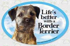grizzle border terrier - Google Search