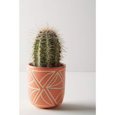 We can plant Cactus on the Garden, we can put it on indoor or outdoor area, or we can put cactus plant on the small area and make it more unique and stunning. Check our collections about Cactus Gar… Cacti And Succulents, Planting Succulents, Cactus Plants, Planting Flowers, Cactus Art, Outdoor Cactus Garden, Outdoor Plants, Outdoor Decor, Indoor Outdoor