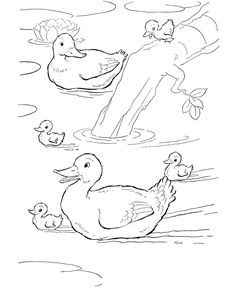 Farm animal coloring page | Ducks swimming in the farm pond