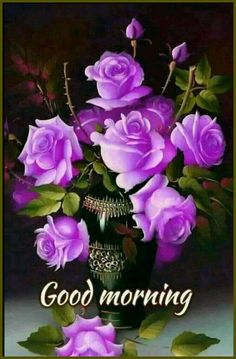 Good Morning Beautiful Pictures, Good Morning Photos, Morning Pictures, Morning Images, Good Morning Roses, Good Morning Cards, Morning Greetings Quotes, Morning Quotes, Morning Status
