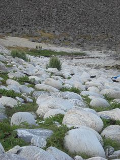 Rullesteiner Sørlandshagen Værøy Lofoten