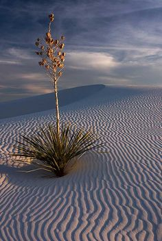 Gorgeous Desert Photo. It reminds me of a bonsai arrangement.
