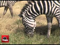 Expédition ANAUTICA au Kenya Episode 2 rencontre avec les Masaïs