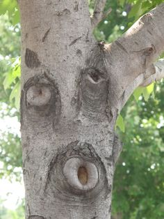 Whistling Wood  BOARD - faces in places -http://www.pinterest.com/kaleidoking/faces-in-places/