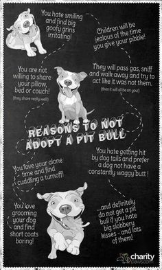 reasons to not adopt a pit bull ;)