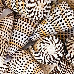 leopard cones...love these! I have a little bowl of these on my mantel