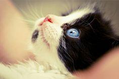 .Ojos azules...