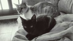 Gatos, cats, Theo e Zara