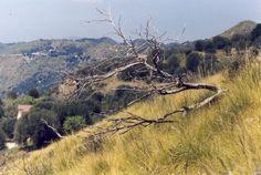 umgestürzter Baum, Foto: S. Hopp