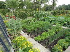 begin juli: wortels, uien, rode biet, pompoenen, courgettes, maïs