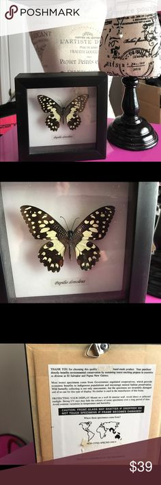 Beautiful Framed Butterfly from the Philippines Please see pics Beautiful Framed Butterfly from the Philippines with UV blocking glass. Butterflies are celebrated throughout the world for their beautiful colors, patterns and shapes. They are also honored with numerous stories, poems, and legends. Depending on where you live in the world, butterflies symbolize different things including rebirth, transformation and the arrival of new life. One of the sides of frame little chip on wood frame…