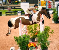 jump that pinto!