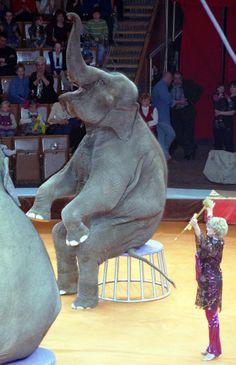 Moscow circus by syair