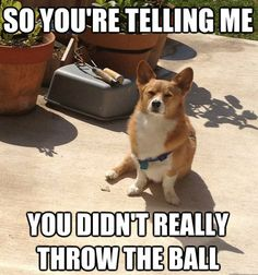 Corgi memes...Because you can never have enough. | Bicycling ...