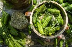odrobaczanie układu pokarmowego - robaczyca Herbal Remedies, Home Remedies, Polish Recipes, Slow Food, Preserves, Pickles, Asparagus, Green Beans, Cucumber
