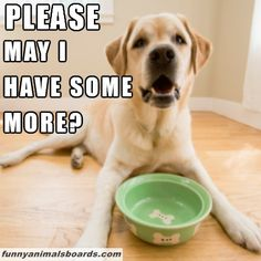 .Both of my puppies favorite question @ Hannah Potter