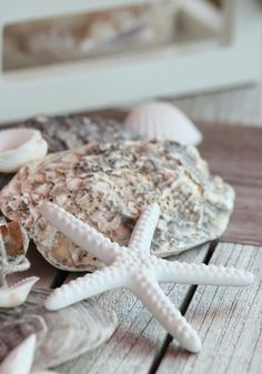 Shells - my bag will have a seaside theme Cottages By The Sea, Beach Cottages, Coastal Homes, Coastal Living, Coastal Farmhouse, Farmhouse Ideas, Coastal Decor, Natural Forms, Summer Of Love