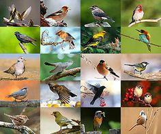 website with bird photos