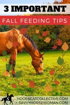 Horse care and feeding can look different in new seasons. How can I help my horse transition to the autumn season? Here are 3 important fall feeding tips for horses. Horse Feed, My Horse, Horse Love, Horse Care Tips, Types Of Horses, Equestrian Style, Equestrian Problems, Equestrian Fashion, Horse Saddles