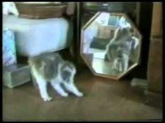 YouTube - Funny Cats