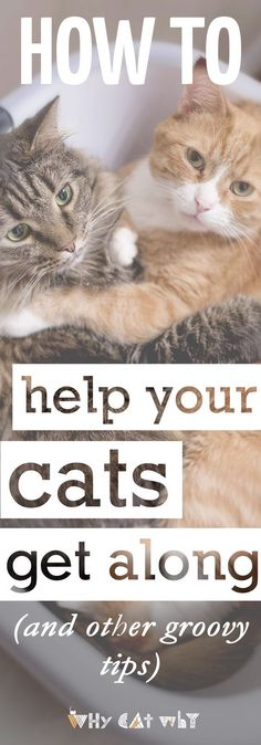 You can probably already tell that your cats have distinct personalities. Kind of like people. They're people-kitties. It makes sense then, that there will be other cat personalities that they just don't mesh with. But good news: There are basic, cut-and-dry steps everyone can (and should) take that will help all the cats in your lives get along swimmingly. #cats #catbehavior