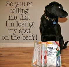 black lab dog baby announcement