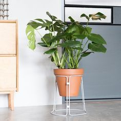 Spitsberg Plantscape  PRICE: €75.00 Design studio Spitsberg designs functional and light objects - Material: Light grey powder coated steel - Available in three sizes 1. 35 cm x 26 cm 2. 45 cm x 22 cm 3. 55 cm x 18 cm