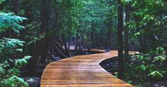This Boardwalk Trail Takes You Through An Ancient Forest In Ontario Cyprus Lake Trail (south of Tobermory). This boardwalk trail takes you through an ancient forest in Ontario. Vacation Places, Places To Travel, Parc National, National Parks, Tobermory Ontario, Tobermory Canada, Voyage Canada, Ontario Travel, Ontario Camping