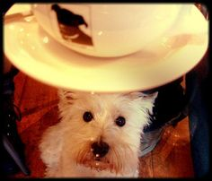 Our guide to Dog-Friendly Coffee Shops in Washington, D.C.