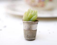The Magic Onions: A Miniature Pot Plant for your Fairy Garden