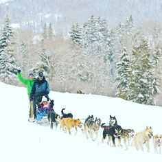 There's so much to do here in the winter.  #dogsledding #steinstyle #SteinEriksenLodge