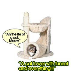 Fun plush and white are how I would describe this adorable little cat tower. It features a cute little tunnel that leads up to a hammock bed. This is a cozy get away that your cat will love and appreciate. Buy the Trixie DreamWorld Gandia Cat Tower Cat Towers, Cat Scratching Post, Just Relax, Cat Tree, Pretty Cool, Cool Cats, Cats And Kittens, Art Projects, Plush