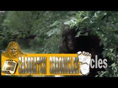 Bigfoot Hotspot Radio - SC EP:252 Hear Nothing, See Nothing, Know Nothing [Sasquatch Chronicles]