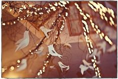 birds in a lighted tree