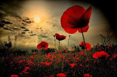 Anzac lest we forget ♥ Anzac Day Quotes, Flanders Poppy, Flanders Field Poppies, Poppy Images, Remembrance Day Poppy, Remembrance Day Pictures, Very Nice Pic, Jolie Photo, Imagines