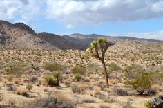 #Joshua Tree National Park #California