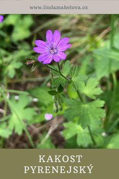 Korn, Flowers, Plants, Honey, Plant, Royal Icing Flowers, Flower, Florals, Floral
