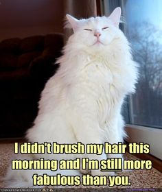 If I were a cat, this is the cat I would be...cuz let's just face it, I'm already more fabulous than you...