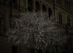 Dead tree shining