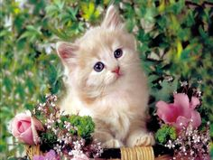 Pictures Of Cute Kittens Wallpapers Wallpapers) – Adorable Wallpapers Little Kittens, Cute Cats And Kittens, Cool Cats, Kittens Cutest, Fluffy Kittens, Persian Kittens, Gatos Cool, Image Chat, Cute Cat Wallpaper