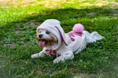Easter Bunny knit sweater for small dog -  Easter Bunny knit sweater for small dog, pullover for dog, pets clothes, bunny costume for dog. cat coat We all know how cute your dog looks in her costume. But there are a few things to keep in mind before selecting the most appropriate outfit for your dog. Nowadays, many people liven up their pets on special occasions such as for instance New Year's Eve or holidays. Choosing dog clothes is usually fun, and seeing your pet in various costumes is…