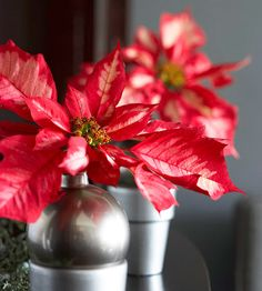 Potted Poinsettias  Make a striking statement with two Christmas staples -- poinsettias and ball ornaments. Spray-paint small terra cotta pots to match your ball ornaments; let dry. Remove their hanger tops and fill the ornaments with water. Place a cut poinsettia flower in the ornament and nestle the arrangement in the pot.