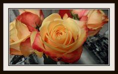 Roses Photo by sylvia172 | Photobucket