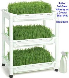 grow your own wheat grass for pets and people