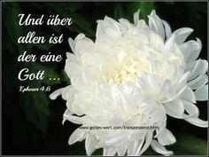 �ber allen ist der eine Gott http://www.gottes-wort.com/transzendenz.html