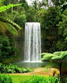 The Atherton Tablelands Tourism Website - Tablelands - Home